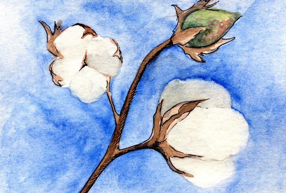 Cuatro razones para elegir algodón orgánico para tu ropa y tu hogar.